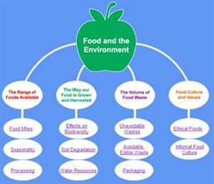 Food & the Environment overview graphic