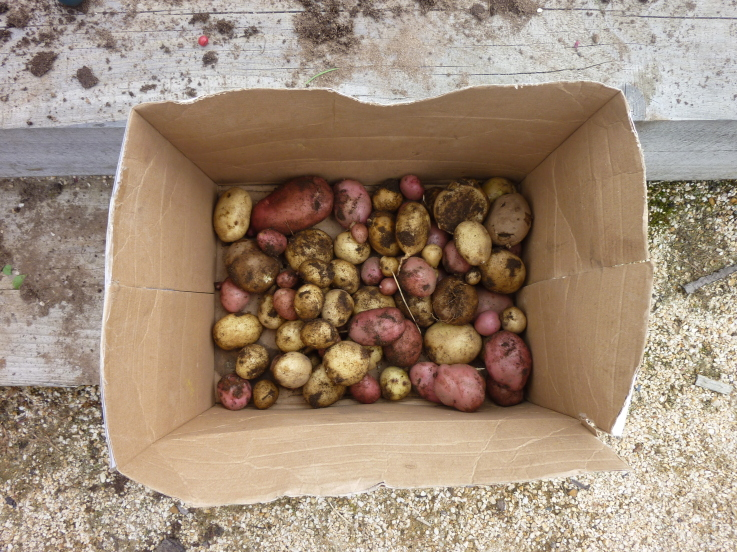 Taters In A Box